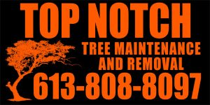 Top Notch Tree Maintenance and Removal